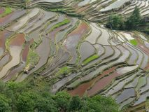 Rice pola tarasy w Yunnan, Chiny fotografia royalty free