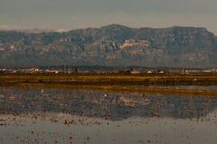 Rice pola w Ebro delcie Zdjęcia Stock