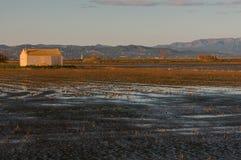 Rice pola w Ebro delcie Obrazy Stock