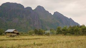 Rice pola w Laos. Uprawa zbierają zbiory wideo