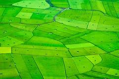 Rice pola w północnym zachodzie Wietnam Fotografia Royalty Free