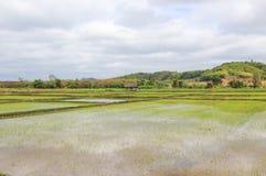 Rice pola w wsi Tajlandia Zdjęcia Royalty Free