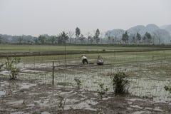 Rice pola z rolnikami Nimh Binh, Wietnam Zdjęcia Royalty Free