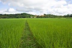 Rice pole Fotografia Stock