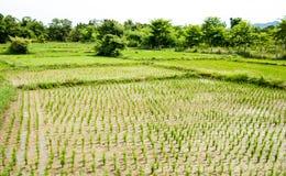 Rice pole, Chiang Mai Fotografia Stock