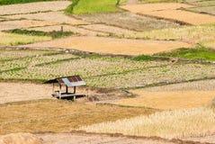 Rice pole przy Nan prowincją Fotografia Royalty Free