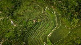 Rice pole tworzy geometryczną formację zdjęcie stock