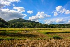 Rice pole w Filipiny, Bohol wyspa Zdjęcia Royalty Free