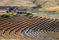 Rice pole w Madagascar Zdjęcie Stock