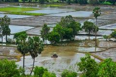 Rice pole w Mekong delcie, Wietnam obrazy stock