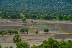 Rice pole w Mekong delcie, Wietnam fotografia stock