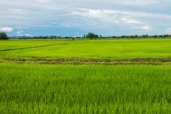 Rice pole w porze deszczowa przy Phetchaburi provinnce, Tajlandia Obrazy Stock