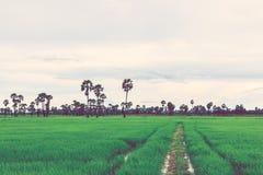 Rice pole w porze deszczowa Retro rocznika filtra skutek Zdjęcia Stock