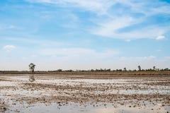 Rice pole w przygotowanie postępie Obraz Stock
