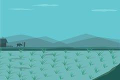 Rice pole w ranku, wektor Zdjęcia Stock