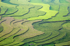 Rice pole w tarasie Obrazy Stock
