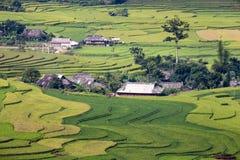 Rice pole w tarasie Zdjęcia Stock