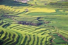 Rice pole w tarasie Obraz Royalty Free