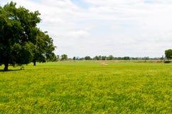 Rice pole z chmurą Zdjęcia Royalty Free