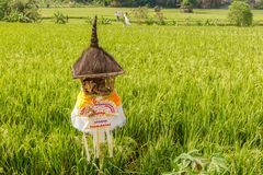 Rice pole z płochą pokrywał strzechą ołtarz dla ofiar Dewi Sri Rice matka krajobrazu wiejskiego bali piękny Indonesia wyspy kuta  fotografia stock