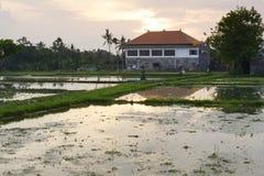 Rice ponds reflecting the sunset, Bali Stock Photos