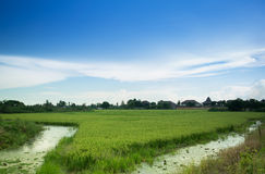 Rice rural landscape. Green field Medium blue sky with clouds And a small canal Stock Photography
