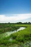 Rice rural landscape Stock Photo