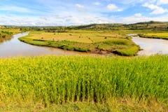 Rice rzeka w afrykanina krajobrazie i pola Obraz Stock