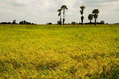 Rice sätter in av thai bonde Arkivbilder