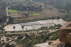Rice sätter in Hampi Indien Royaltyfri Bild