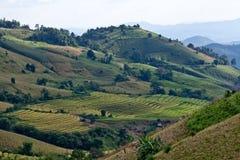 Rice sätter in på det terrasserade berg. Arkivfoto