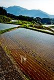 Rice sätter in terrassen i Kyushu Japan Royaltyfria Foton