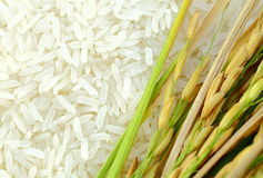 Rice's grains,Ear of rice background. Rice's grains and ear of rice background Stock Photos