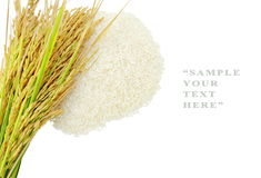 Rice's grains,Ear of rice on white background. Rice's grains,Ear of rice isolate on white background Stock Photos