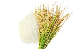 Rice's grains,Ear of rice on white background. Rice's grains,Ear of rice isolate on white background Stock Photo