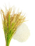 Rice's grains,Ear of rice  on white background. Rice's grains,Ear of rice isolate on white background Stock Image