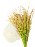 Rice's grains,Ear of rice  on white background. Royalty Free Stock Photo