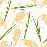 Rice seamless pattern. Seamless pattern with rice leaves, spikelets and seeds on a white background. Vector illustration. Eps 10 Stock Images