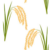Rice seamless pattern. Seamless pattern with rice. Leaves and spikelets of rice on a white background. Vector illustration. Eps 10 Royalty Free Stock Image