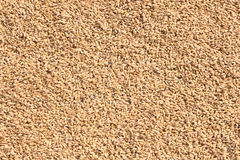 Rice seed Royalty Free Stock Photography