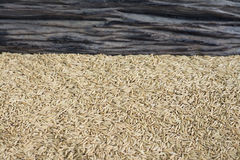 Rice seed background. Rice seed on wooden background Stock Photo