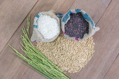 Rice seed. Brown rice, keep healthy concept, brown background Royalty Free Stock Photo