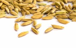 Rice seed. Stock Images