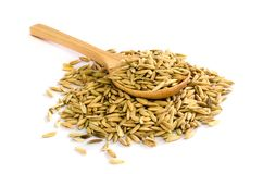 Rice seed. Royalty Free Stock Photography
