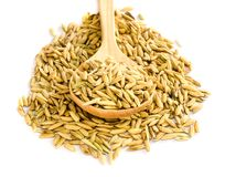Rice seed. Royalty Free Stock Photos