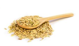 Rice seed. Stock Photos