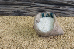 Rice seed. On wooden background Stock Image