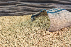 Rice seed. On wooden background Royalty Free Stock Image