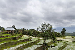 Rice seedling on terrace rice fields Stock Photo