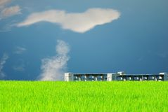 Rice seedling and vantage small bridge. With sky blue Stock Images